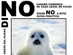 protesta-por-matanza-de-focas