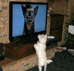 tv perritos
