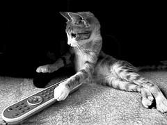 TV gato control remoto
