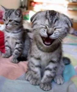 gatos-riendose